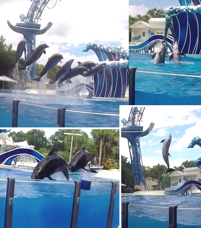 dolphin-show